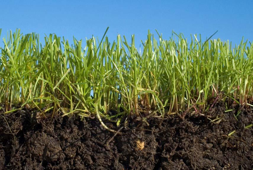 54cac3d5cc6fc_-_soil-alive-lgn.jpg
